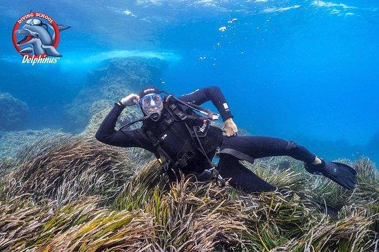 プエルト・デ・モガンでスキューバダイビングを体験