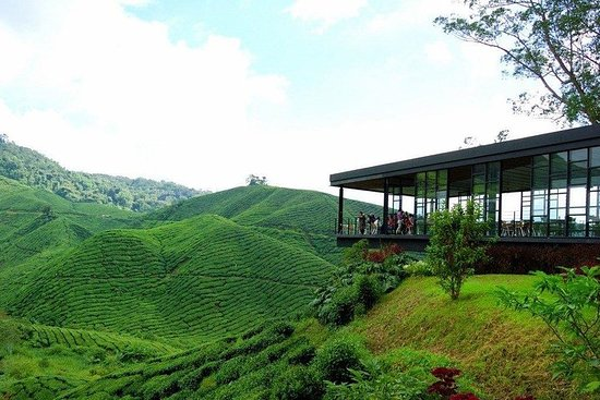 Garden Of Nature - Cameron Highlands...