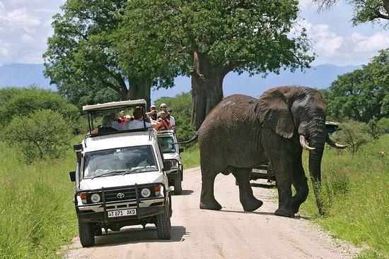 16-daagse safari's door Oeganda en ...