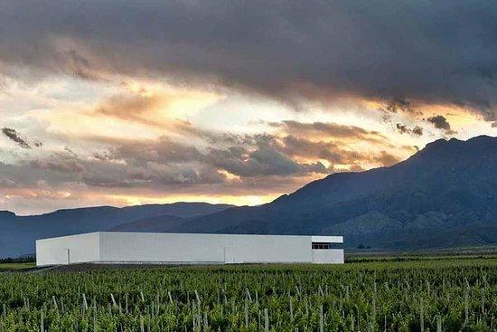 Tour privado exclusivo às vinhas de Mendoza por proprietários e...