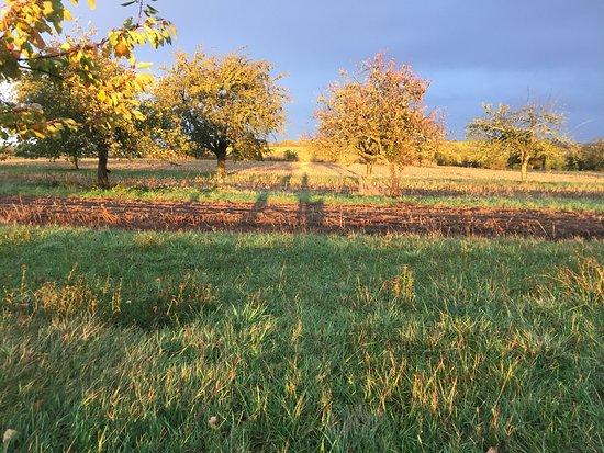 Romanswiller, Francia: sur la colline un soir d'automne, entre soleil et pluie