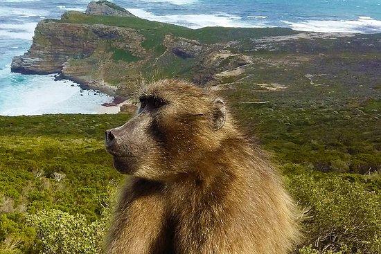 開普敦的全日角點,海豹島和巨石企鵝保護區之旅