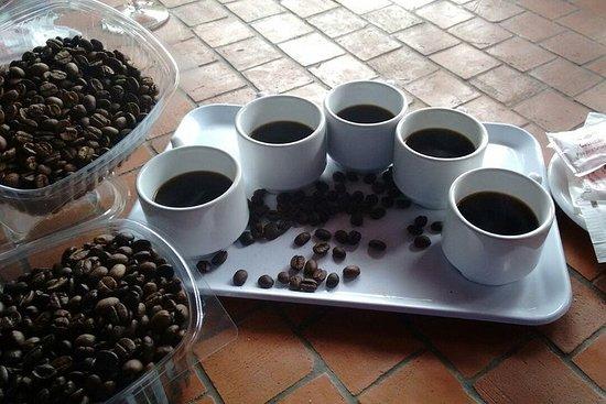 Kaffe og vin: Nordruten på Gran Canaria Tour