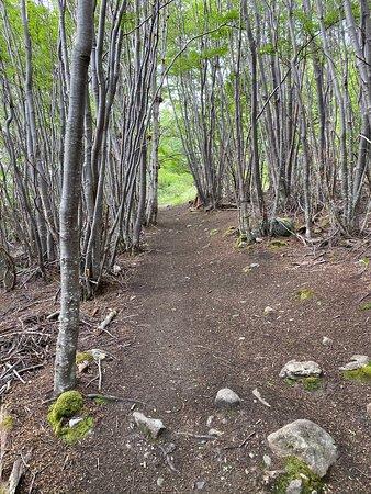 Isla Navarino, Chile: Hike from Wulaia Bay - canopy of trees