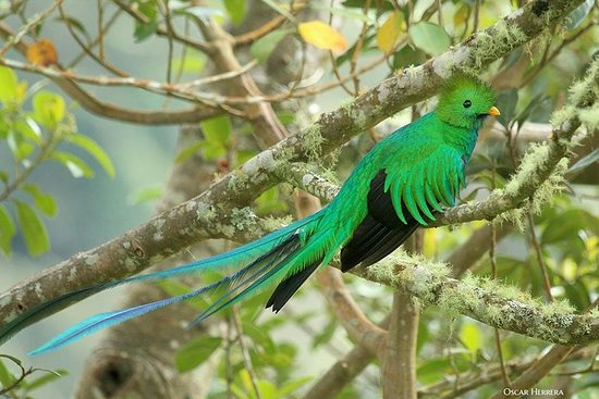 Los Quetzales National Park and...
