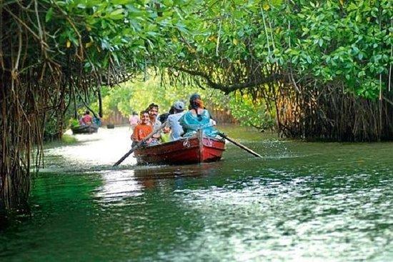 Excursion à la mangrove de Pichavaram et au temple Nataraja...
