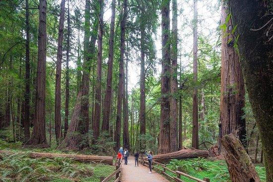 Tur til Muir Woods og Sausalito, inkl...