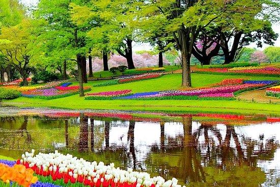 Udforsk Amsterdams tuliparver med et besøg på Keukenhof