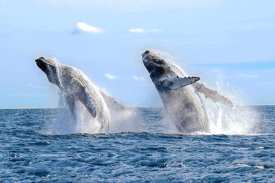 Whale Photo Safari