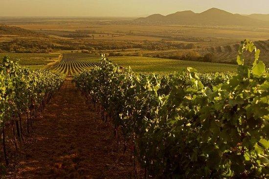 Gran tour de cata de vinos de Gyongyos...