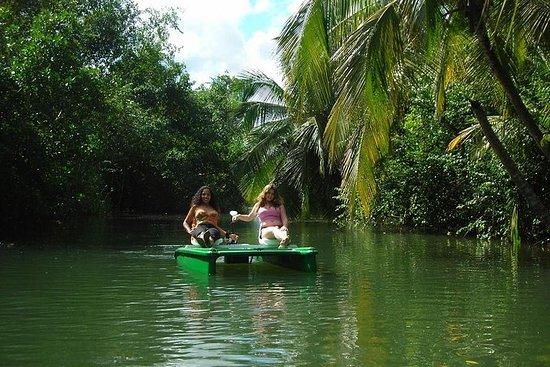 Mangrove Kajakkpadling