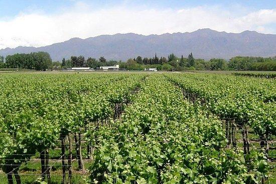 Ruta sur del vino