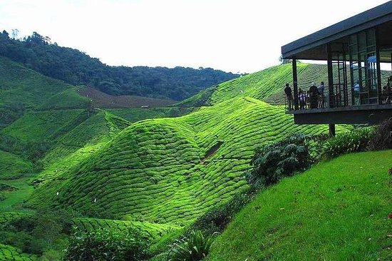 Private Cameron Highlands Day Tour...