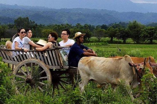 Experiencia de campo local de día completo desde Bangkok
