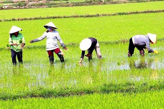 从胡志明市出发的私人全日湄公河之旅,包括游船之旅