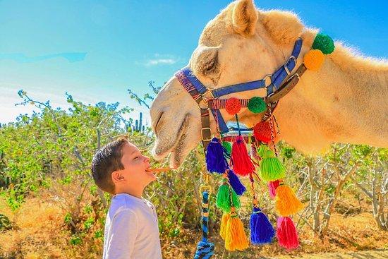 Safari en camello y excursión en...