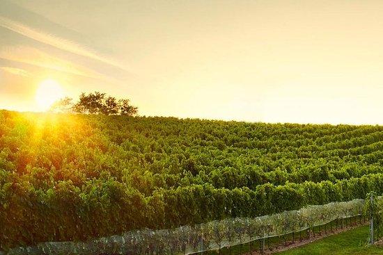Gran tour del vino en pequeñas colinas de los Cárpatos