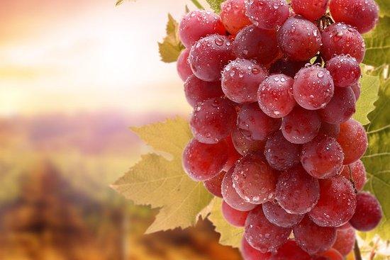 Visite privée: Journée complète de dégustation de vins Naousa & Ag...