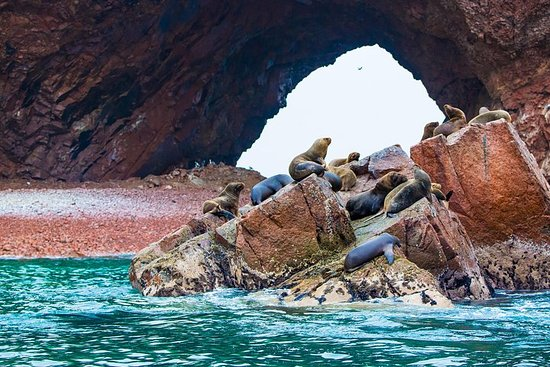 Ilhas Ballestas e Paracas National Park...