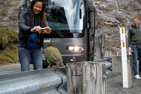 Luxury Milford Sound Coach and Scenic...