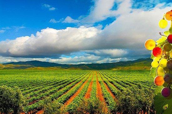 Excursión por la ruta del vino en el...