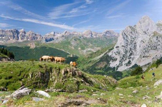 Gita giornaliera privata sui Pirenei da Barcellona