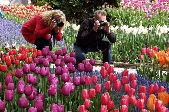 Skagit Valley Tulip Festival Dagtrip ...