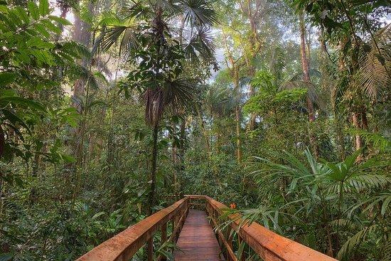 Cinco Ceibas Rainforest Reserve and...