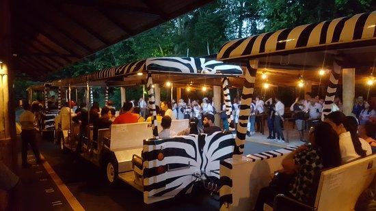 Crowded safari trams
