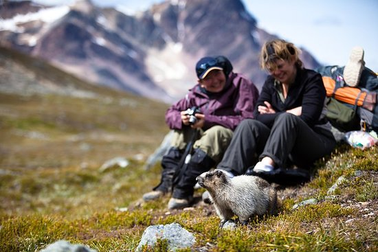 Jasper nach Banff - nur Hinfahrt