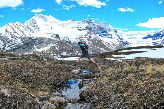 Excursion aller simple de Banff à Jasper