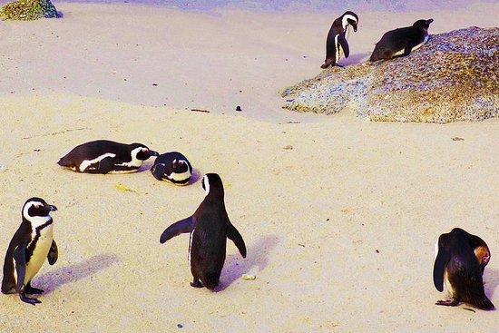 Cape Point Day Tour incluant la colonie de pingouins de Boulders du...