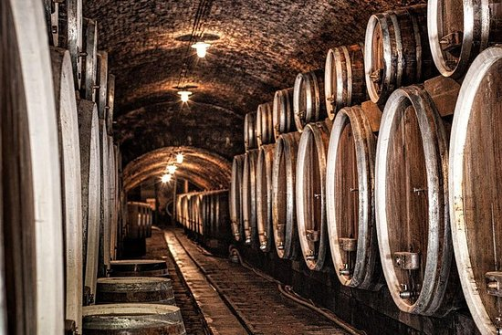 Ilok Wine and Gastro Tour from Zagreb