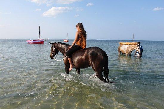 Passeggiata sull'oceano a cavallo a Vilankulos, Mozambico