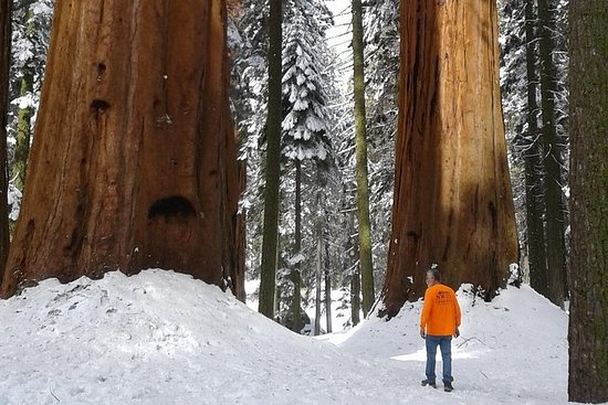 Sequoia National Park Snowshoe Adventure