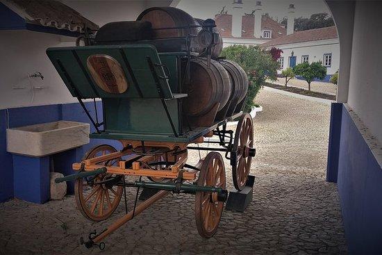 Tour de vino y corcho de día completo a Alentejo desde Lisboa