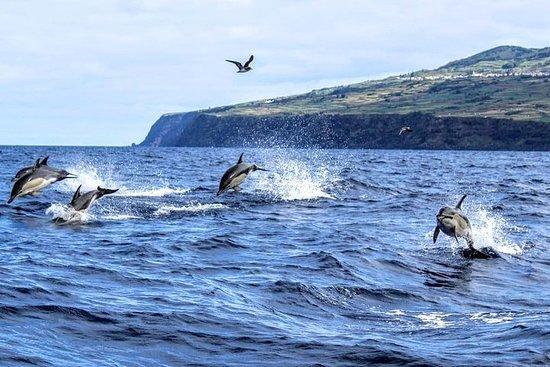 Avistamiento de ballenas...