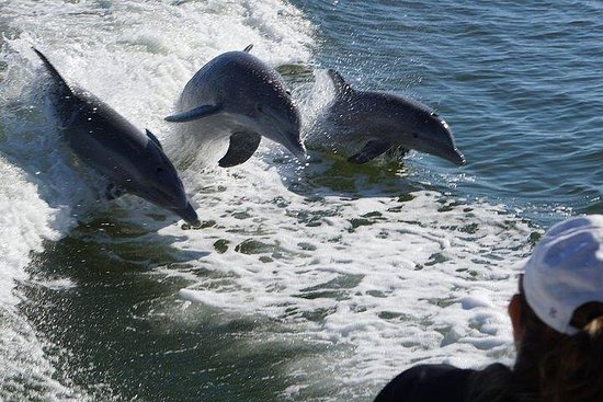 Private Dolphin, Shelling & Sightseeing Eco Boat Tour!