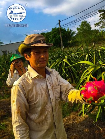 The farmer is offering the fresh dragon fruit