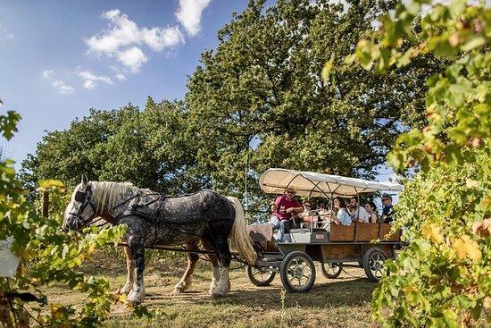 Amazing trotting through the vineyard in Umbria