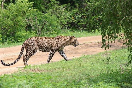 Safari d'une journée - Parc national...