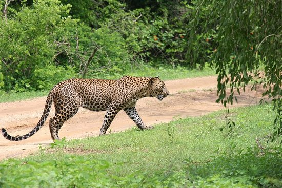 Ganztägige Safari - Yala National...
