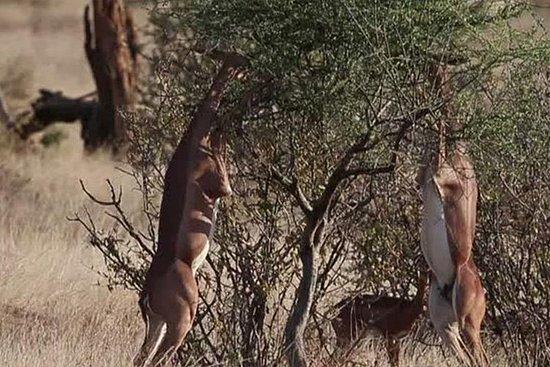 7 días vida salvaje Safarí Namibia...