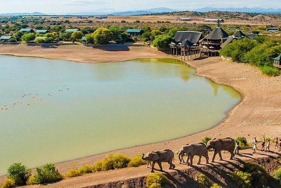 开普敦为期2天的Glamping和南非野生动物园小团体之旅