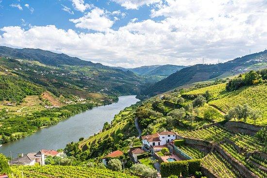 Porto: Day Trip to Douro