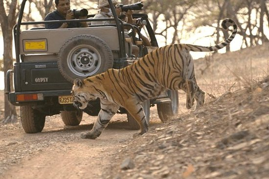 Ranthambore National Park Day Trip...