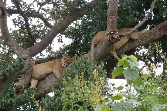 3 jours en safari dans le parc...