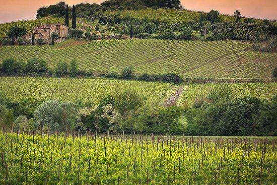 私人旅遊Brunello di Montalcino和Nobile di...