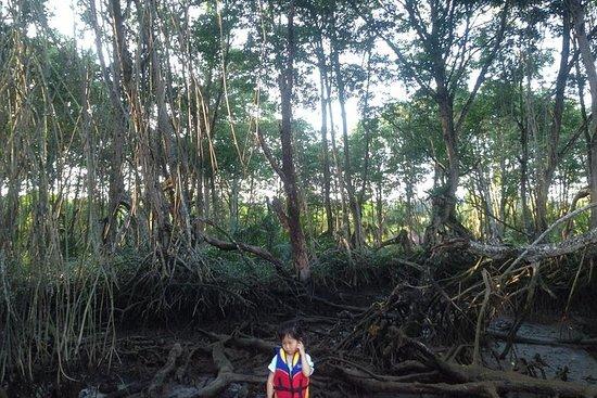 Mangrove & Bandar bei Nacht
