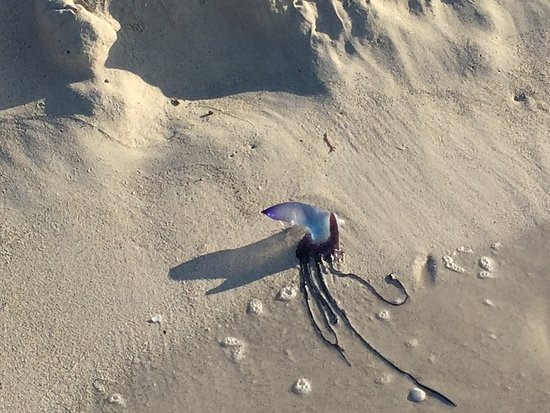 He had been washed up on the sand so I put him back in the sea.